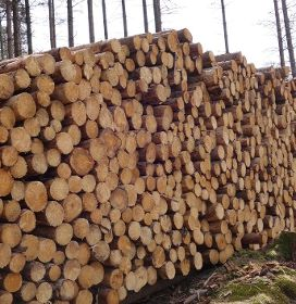Fakten zur Holzkrise