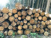 Rundholz im Wald, Quelle: ZVDH/Büttner